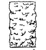 svinets